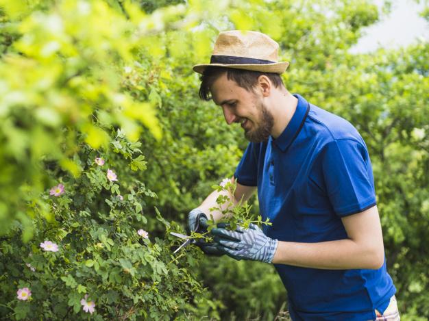 Cuidado de jardines
