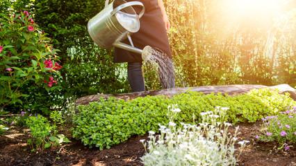 Como cuidar un jardin en verano
